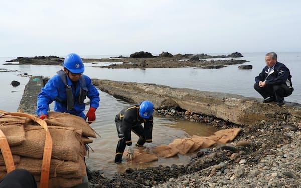 海の浅瀬にスラグの入ったユニットを並べて埋めていく(24日、泊村)