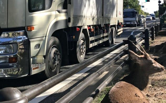 大型トラックが真横を通過してもシカが動じる気配はない(奈良市)