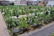 アグリメディアが運営する貸農園「シェア畑」