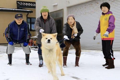 2月、ヘルスツーリズム認証委員会の認証取得のために実施されたプログラム「秋田犬と散歩」(秋田県三種町、ヘルスケアデザイン秋田提供)=共同