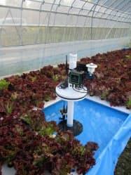農地に設置したセンサーの様子。温湿度や水位などの情報を収集できる