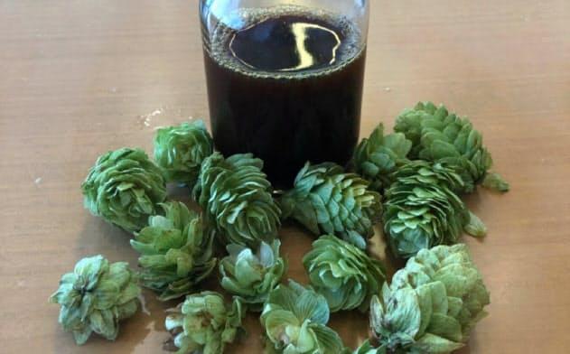 ホップを熟成してエキスをつくる(写真手前が収穫したホップ、瓶の中が完成した熟成ホップエキス)