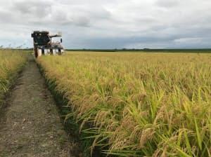 豊作見込みだった19年産米の需給は作柄不良で均衡になった(新潟市)
