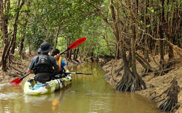 カヤックで散策できる沖縄県東村のマングローブ林