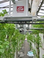 地熱による温水とIoTを活用したバジルの水耕栽培の実証実験に取り組んでいる(岩手県八幡平市)