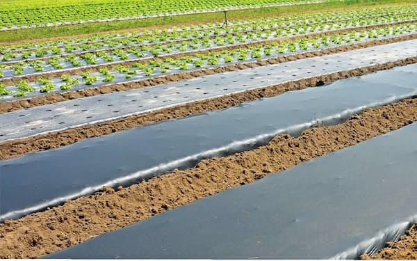 農業フィルムでは生分解性プラスチックの活用が進んでいる