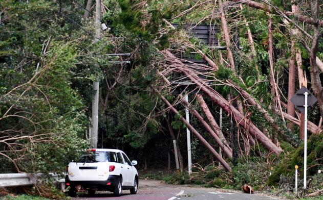 台風では大量の倒木も停電が長引く原因となった(9月、千葉県君津市)