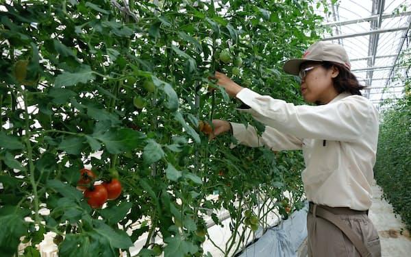 トマトから発散した量と同じ量の水分を供給する
