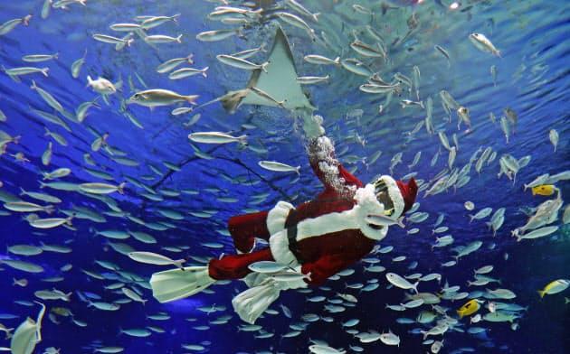 魚たちにクリスマスプレゼント