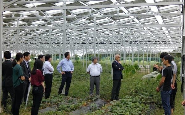 千葉大の学生の企画で、京葉銀の取引先が営農型太陽光発電の現場を見学した(千葉市)