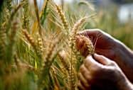 米農務省は米国産小麦の輸出増加を見込む=ロイター