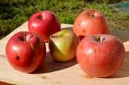 良品計画が全国30店舗に販売を拡大した青森県産の不ぞろいリンゴ