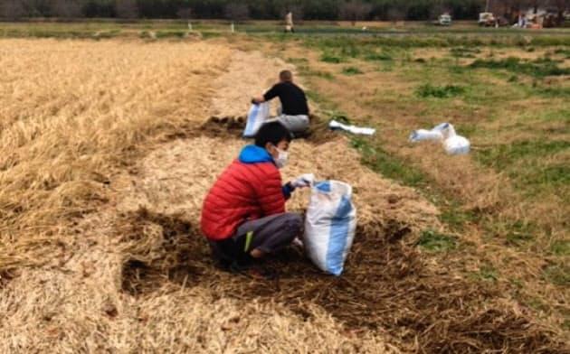 台風水害で畑に押し寄せた稲わらを土のうに詰める作業をボランティアが担う(11月、福島県いわき市)