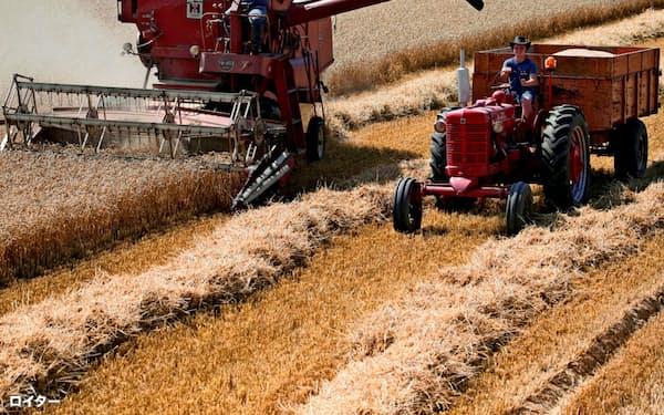 小麦の世界在庫は積み上がっている=ロイター