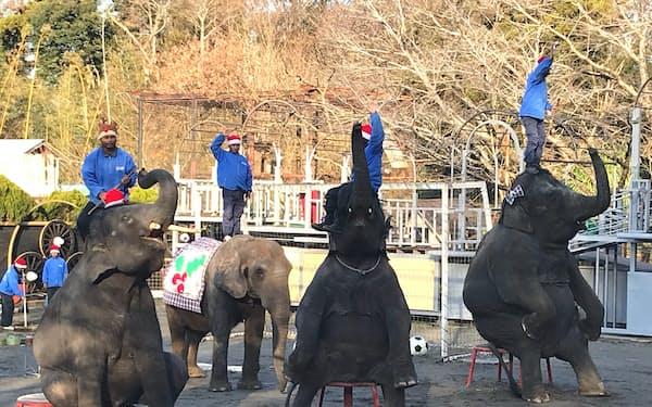 ショーではゾウの器用な一面を見ることができる