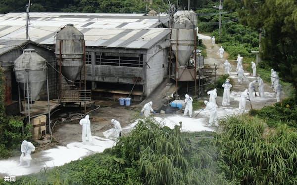 飼育豚が豚コレラに感染した沖縄県うるま市の養豚場で、防疫作業をする県職員ら(8日正午ごろ)=共同