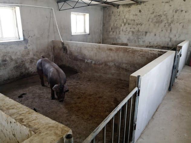 アフリカ豚コレラのまん延が豚肉高騰の原因(遼寧省大連市)