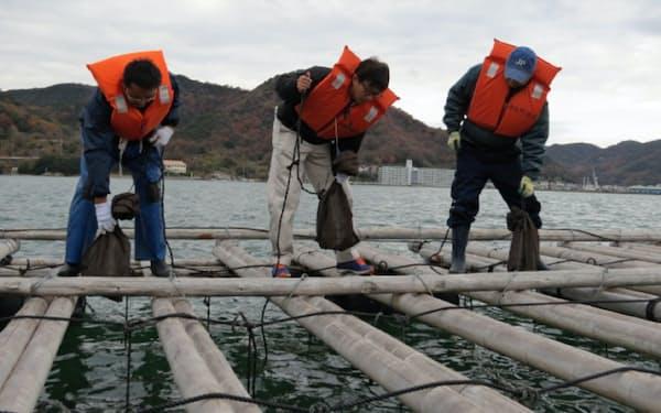 カキ養殖いかだから袋に入れた清酒を海中につるし熟成を図る(日生漁港沖)