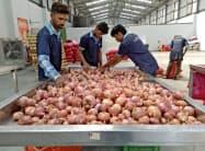 昨夏の天候不順でタマネギなど野菜が高騰している(印西部マハラシュトラ州)=ロイター
