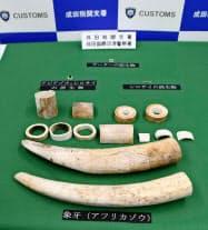 押収されたアフリカゾウの牙やチーターの歯など(14日午後、成田空港)=共同