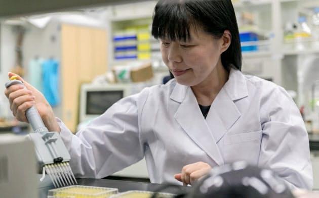 小腸にすむ乳酸菌が免疫に関わる仕組みを発見した(辻上級主任研究員提供)