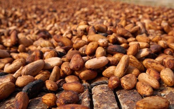カカオ豆の生産地域は限られる