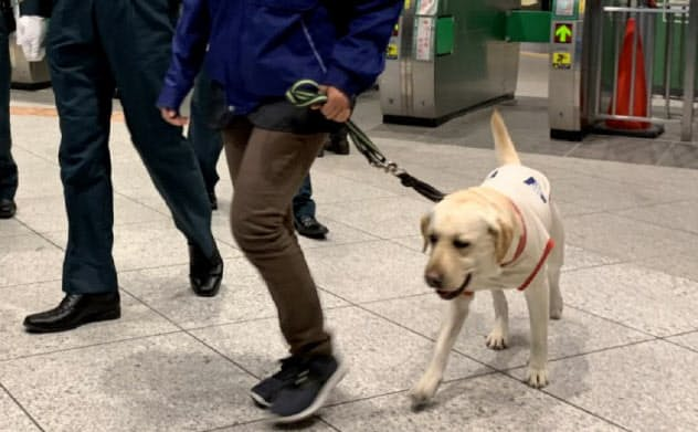 探知犬が駅を巡回して爆発物をかぎ分ける(JR東日本とJR東海が東京駅で実施した実験、2019年12月)