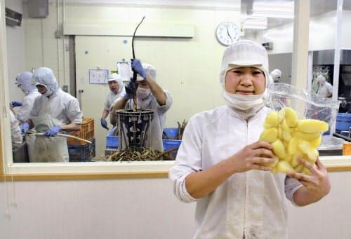 「九神ファームめむろ」で障害者の指導員として働く川本明宏さん(2019年12月、北海道芽室町)=共同