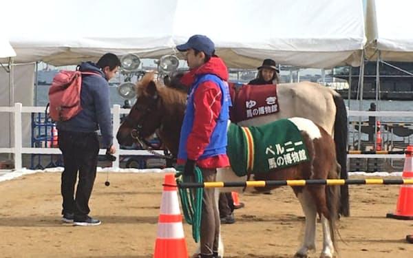 ホースメッセに登場した馬の博物館(横浜市)のポニー