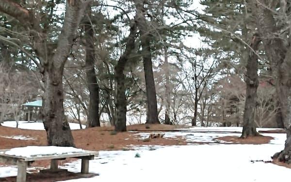 地吹雪体験ツアーの場所は雪不足で地面が見えている