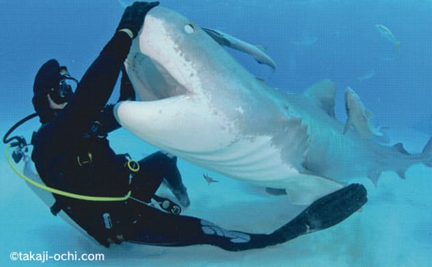 バハマでは6種類のサメを一度に見ることができる