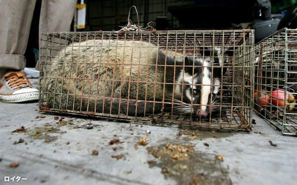 中国では今も野生動物が食用として違法に売られていることが明らかになった(2004年、広州市の市場で売られていたハクビシン)=ロイター