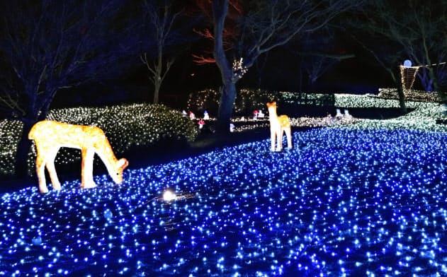 奈良公園で披露された「しあわせ回廊なら瑠璃絵」の試験点灯(7日夕、奈良市)=共同