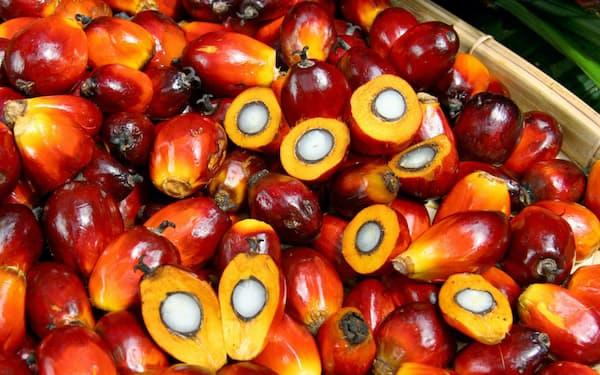 中国は大豆油の代替でパーム油を買い付けている(原料のアブラヤシの実)