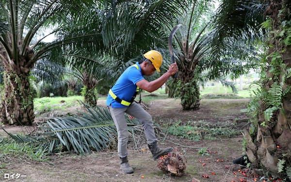 農園の労働実態も広く情報を集める(マレーシアのパーム農園、1月)=ロイター