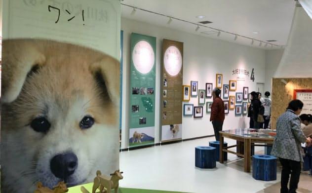 秋田犬ツーリズムの活動は473人の雇用創出効果があった(秋田県大館市の「秋田犬の里」)