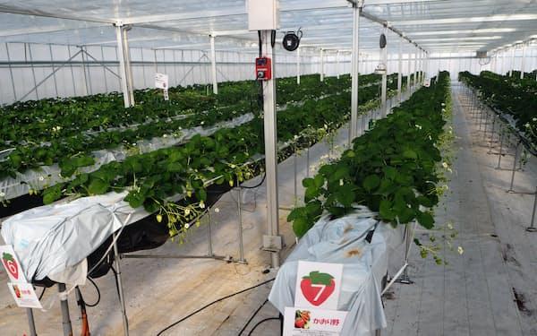 太陽光発電と農場を組み合わせた「ソーラーファーム」(群馬県高崎市)