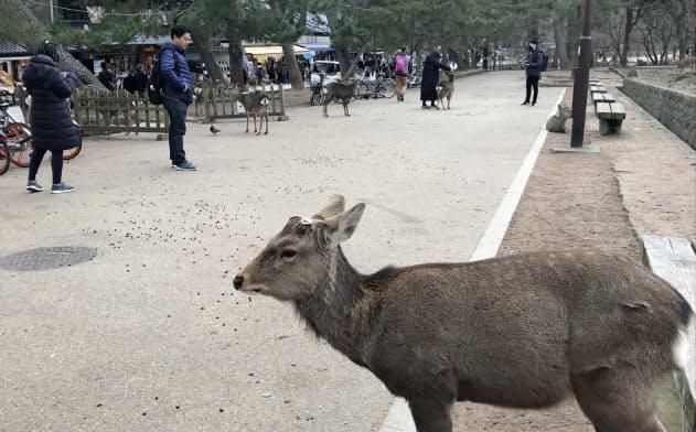 奈良を訪れる観光客も減少している(奈良市)