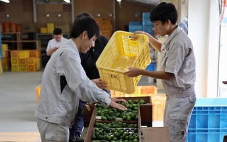 徳島県はすだちの輸出拡大に向けて特別支援学校との協力を拡大する(2019年9月)