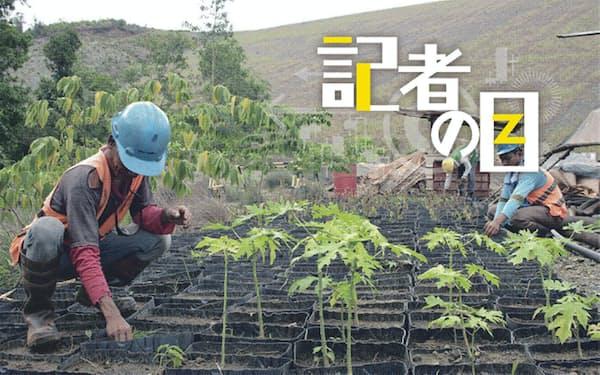 住友金属鉱山はフィリピンで植林活動を続けている