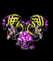 中国・上海の研究者らがデータベースに登録した新型コロナウイルスのたんぱく質の立体構造
