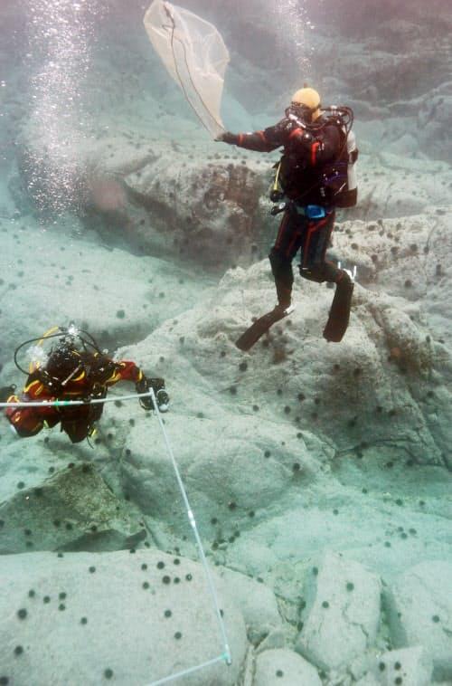 佐藤さんに誘われ、藻場のモニタリング調査に参加した勇志さん(右上)。白い肌をむき出しにした岩場を目の当たりにした。「ウニ以外なにもない」(岩手県大船渡市の綾里港沖)