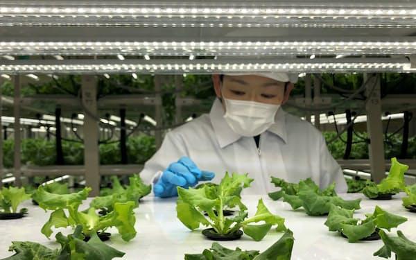 西友上福岡店に設置した植物工場(埼玉県ふじみ野市)