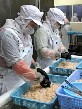 北海道の食の現場では外国人技能実習生が活躍している(稚内市の水産加工会社)