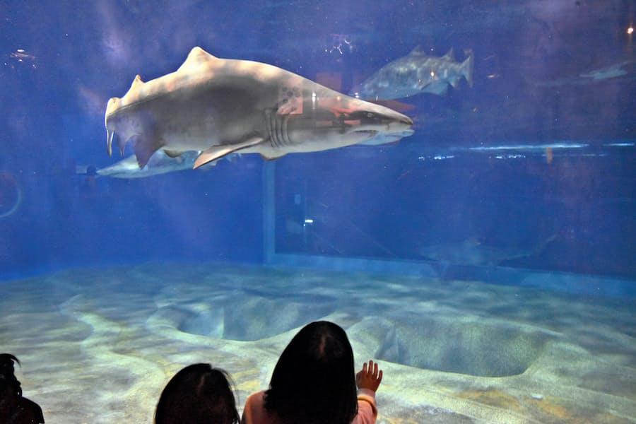 茨城 県 水族館 アクア ワールド 大洗