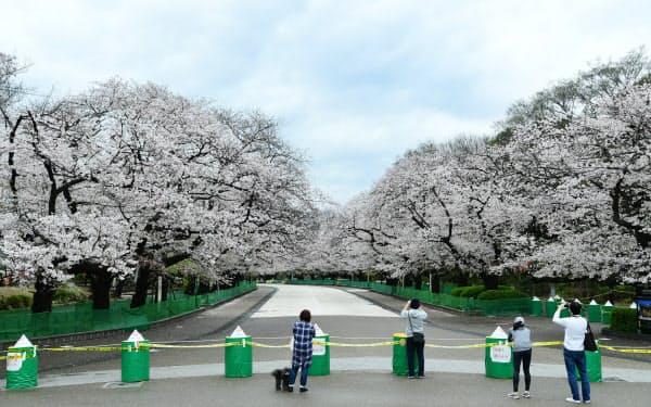 新型コロナウイルス感染拡大防止のため、封鎖された上野公園の「さくら通り」(28日午前、東京都台東区)