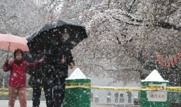 雪が降る中、封鎖された上野公園の桜並木を見に訪れた人たち(29日、東京都台東区)