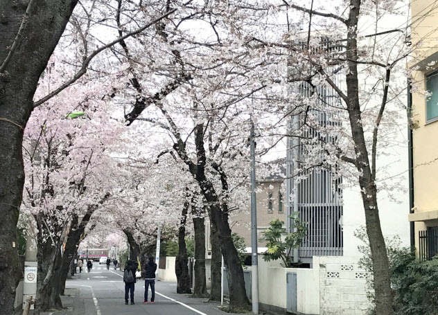 桜並木は今年も静かに花を咲かせた(3月下旬、東京都世田谷区)