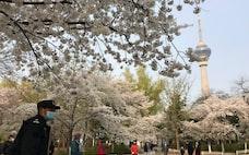 桜が咲くころの日中関係
