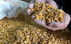 食の安定供給 カギ握る意外な作物